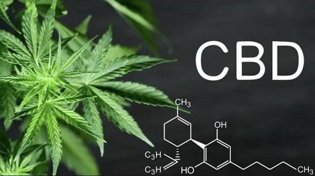 le CBD et sa molécule